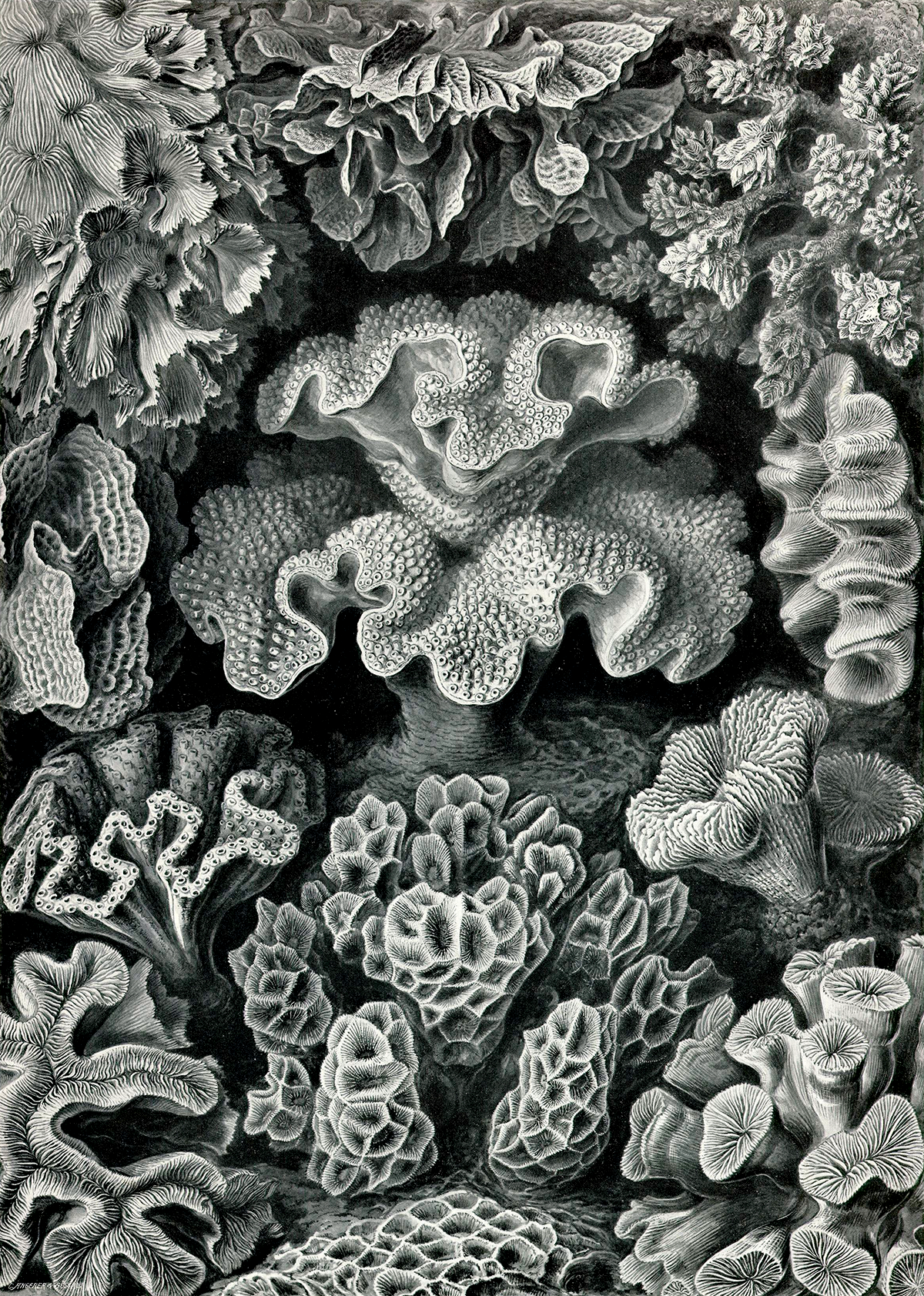 Art Forms in Nature di Ernst Haeckel